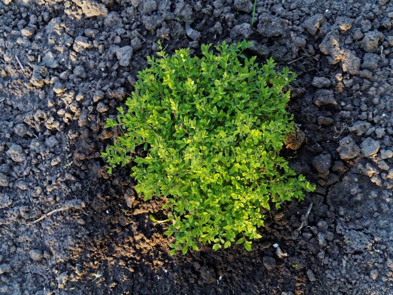 Lansdscaping buisson photo libre de droits