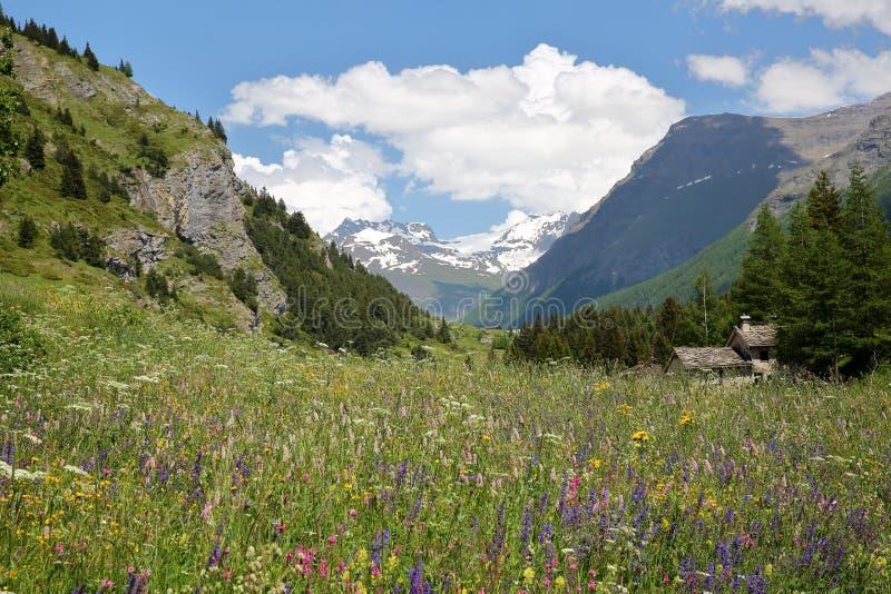 LANSLEVILLARD, FRANCEÂ: Krajobraz z kolorowymi kwiatami w przedpolu, Vanoise park narodowy, Północni Alps zdjęcie stock