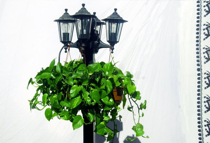 Lantaarn met installaties op de achtergrond van wit blad met zwarte royalty-vrije stock afbeeldingen