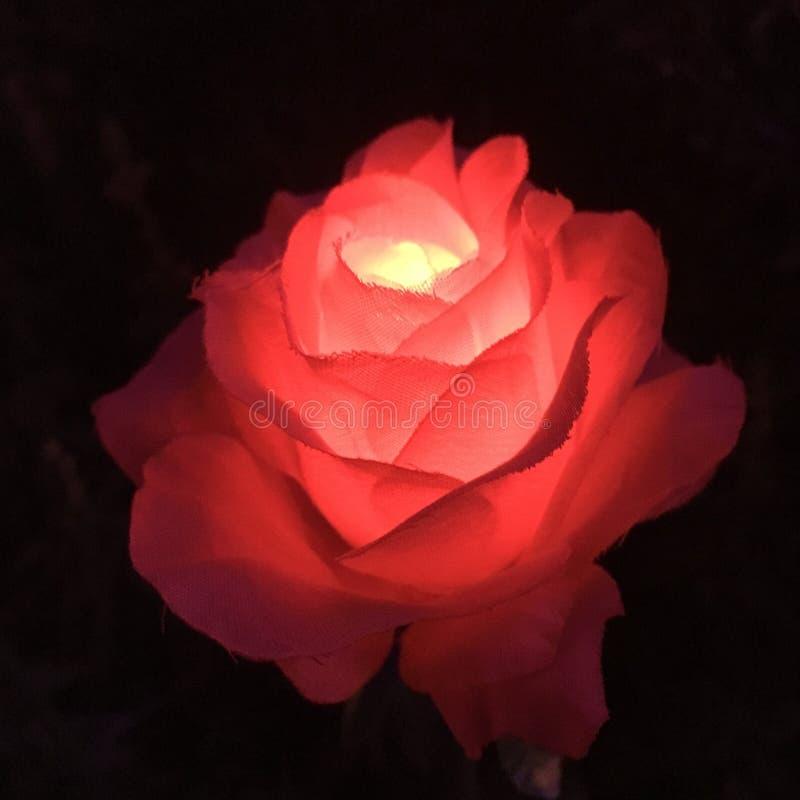 Lantaarn show-plastiek bloemen royalty-vrije stock foto's