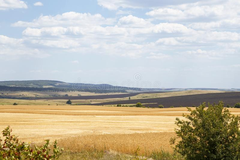 Lantbruk jordbruk Landskap natur, skördsäsongkorn, sädesslag moget vete f?r f?lt arkivbild