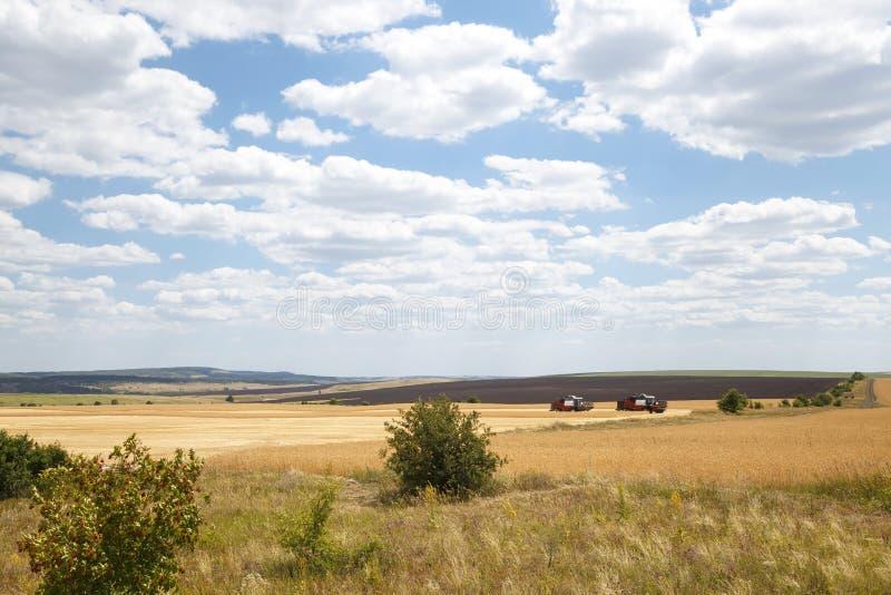 Lantbruk jordbruk Säsong av att skörda korn, sädesslag Två skördearbetare som arbetar i fältet på skörden av moget vete på arkivfoton