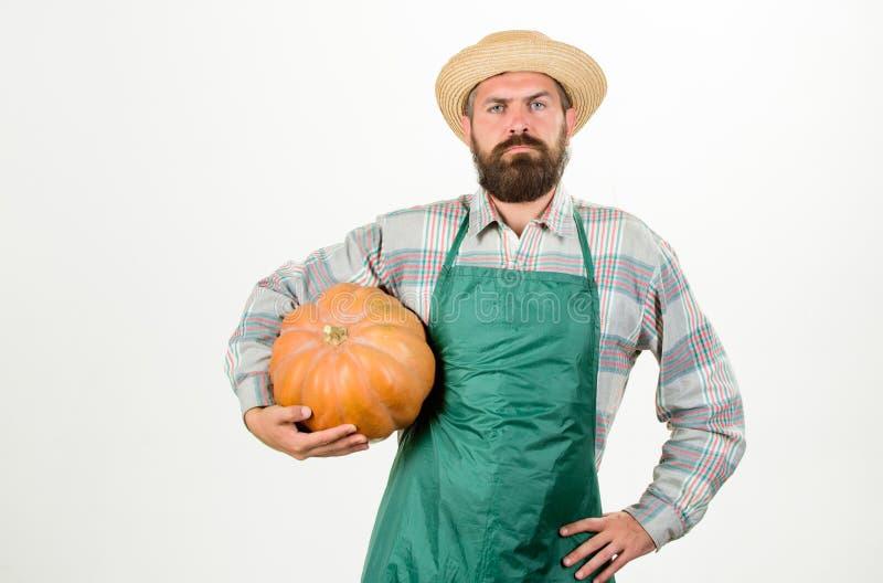 Lantbruk och jordbruk Mannen uppsökte det lantliga bondekläderförklädet som framlägger vit bakgrund för pumpa åkerbruk frö royaltyfri bild