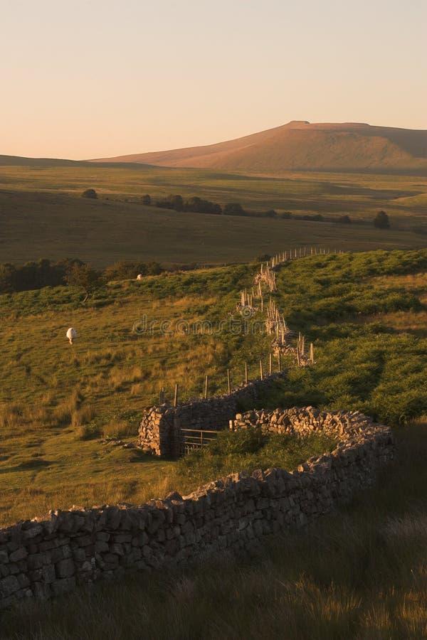 lantbrukfälthäst inklusive väggen royaltyfria bilder