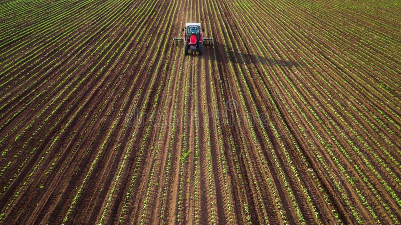 Lantbruktraktor som plogar och besprutar på vetefält royaltyfria foton