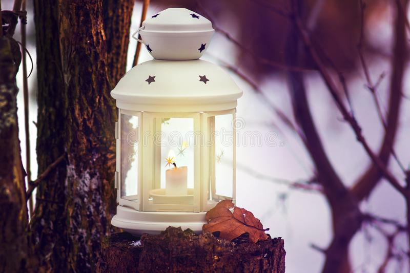 Lantern with candle in forest near tree in evening. Christmas night in the forest with lantern light_. Lantern with candle in forest near tree in evening royalty free stock photography
