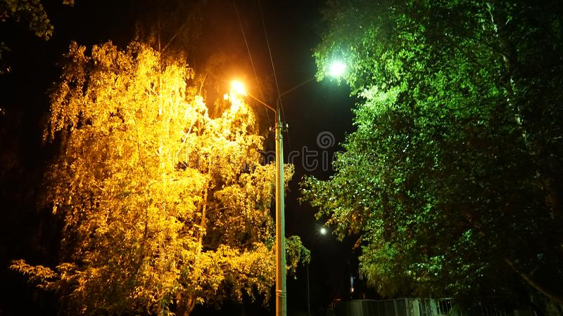 The lantern illuminates two trees in yellow and green royalty free stock image
