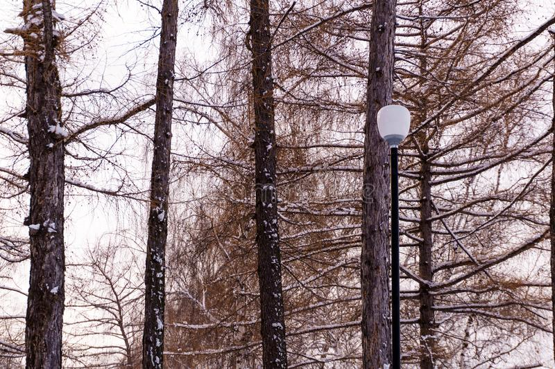 Lantern in the winter forest stock photography