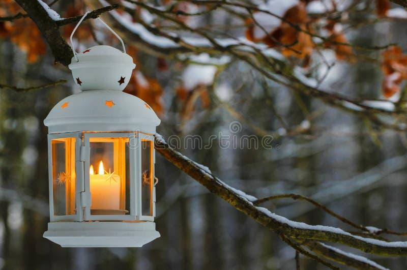 Lanterna bianca che appende sul ramo dell'abete in foresta. immagini stock libere da diritti