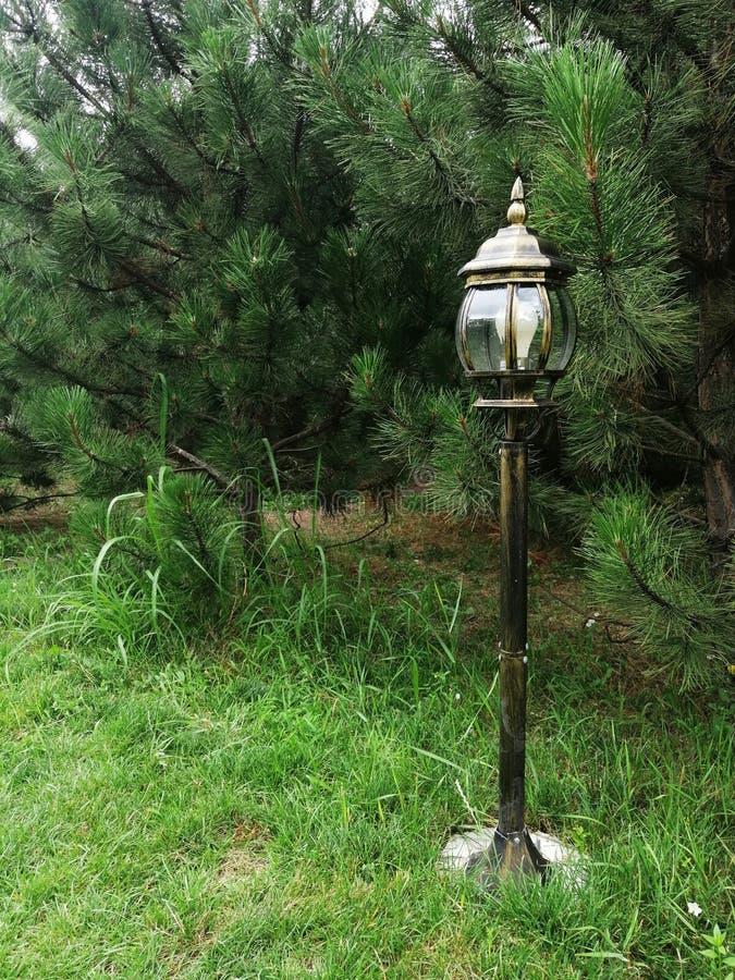 Lanterna bonita na grama fotografia de stock