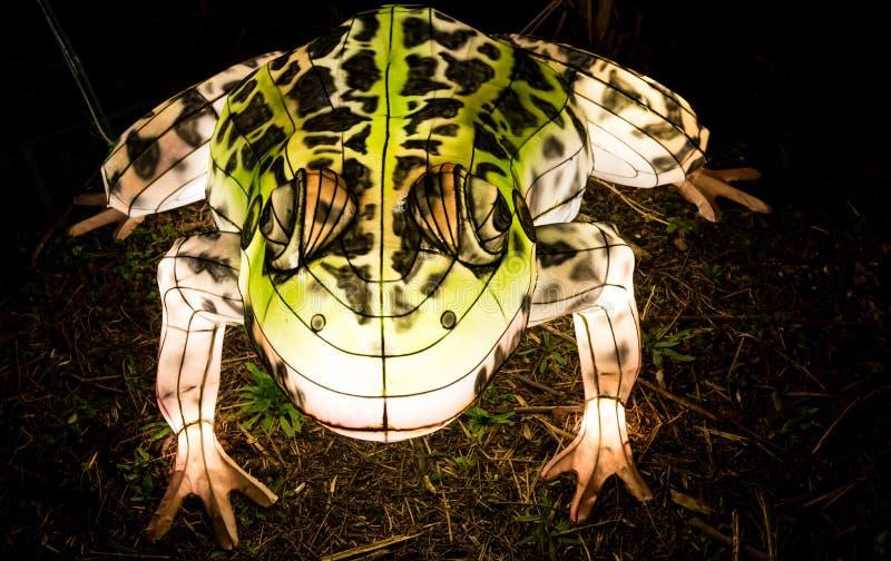 Lanterna del rospo che emette luce nello scuro fotografia stock libera da diritti