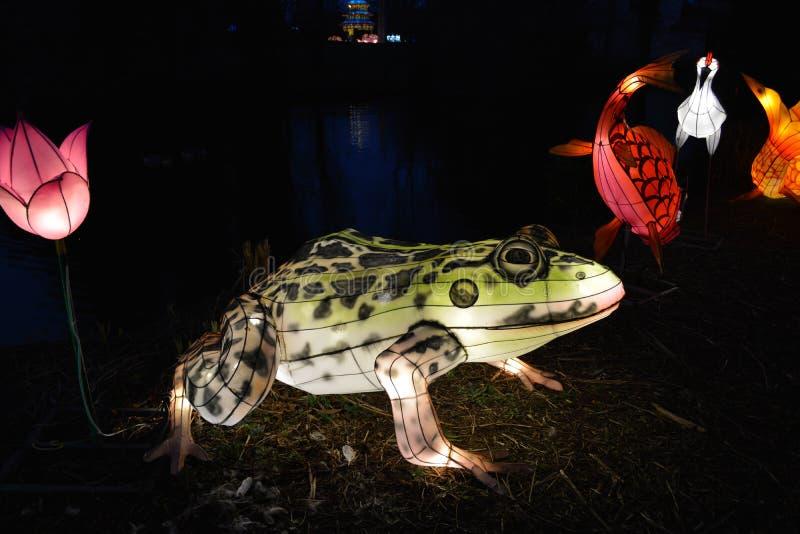 Lanterna della rana fotografie stock libere da diritti
