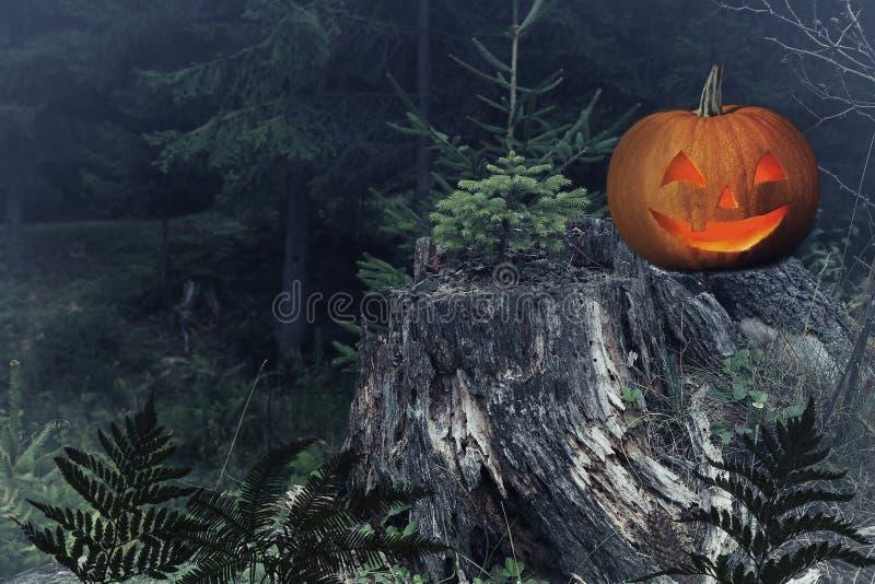 Lanterna do jaque da cabeça da abóbora de Dia das Bruxas no coto de árvore foto de stock royalty free