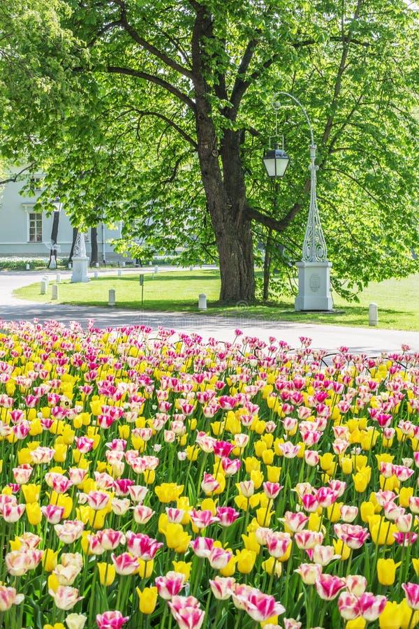Lanterna e un letto di fiore con i tulipani, St Petersburg, Russia fotografia stock libera da diritti