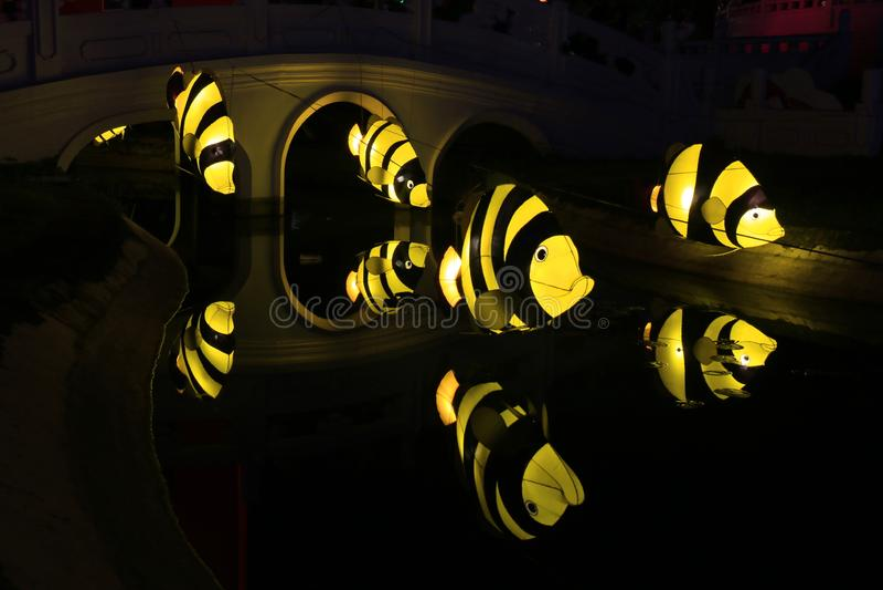 Lanterna Siamese dos tigerfish imagem de stock