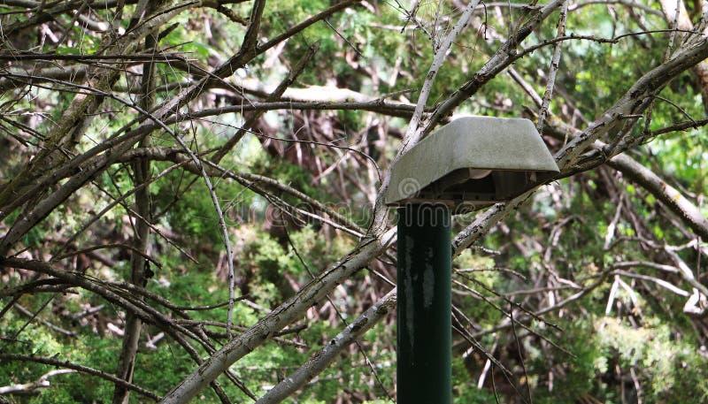 Lanterna sola nel parco su un fondo degli alberi Alberi verdi e vita di città fotografie stock libere da diritti