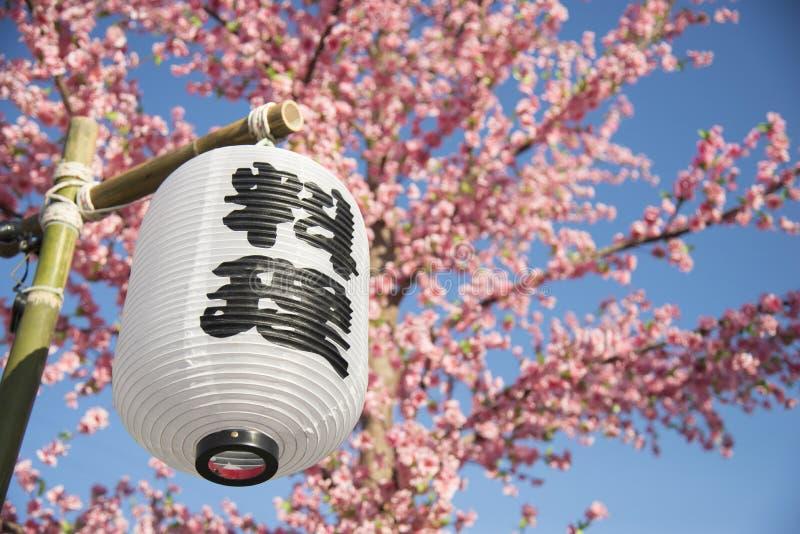 Lanterna tradizionale del Giappone con primavera del fiore del fiore di sakura la parola giapponese sulla lanterna sta significan fotografia stock libera da diritti