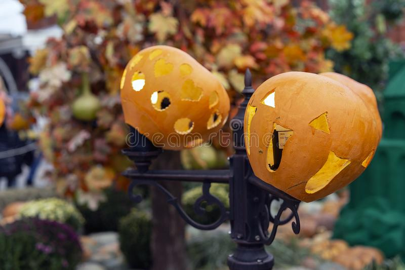 Lanternas da abóbora no fundo das folhas de bordo amarelas fotografia de stock royalty free