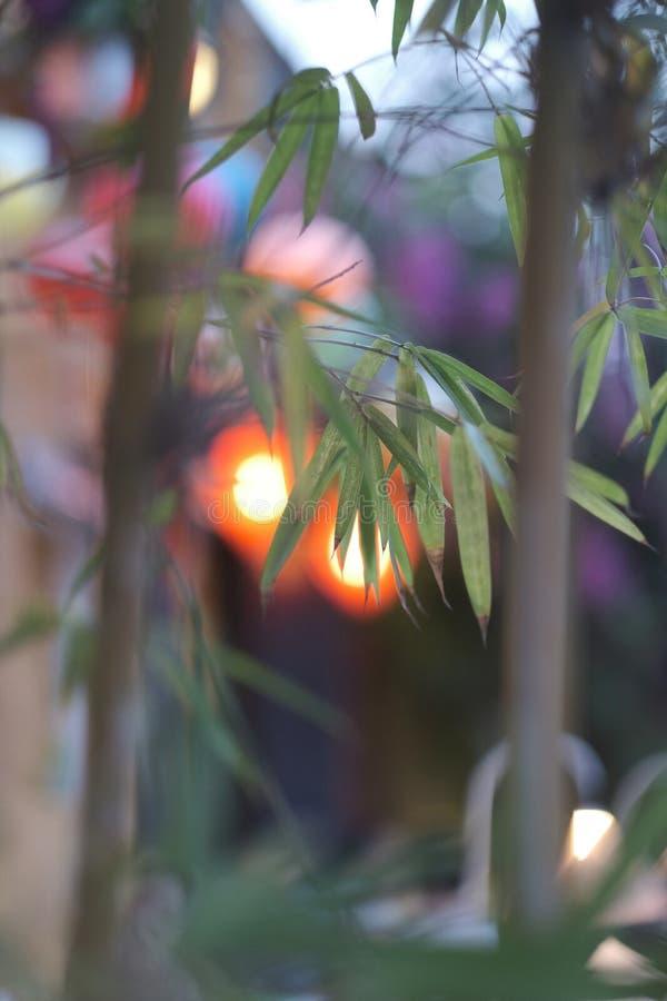 Lanternas leves através das folhas das árvores de bambu fotos de stock