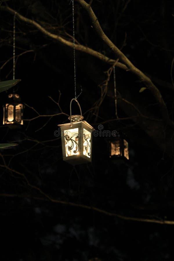 Lanternas que penduram da árvore na noite imagens de stock royalty free