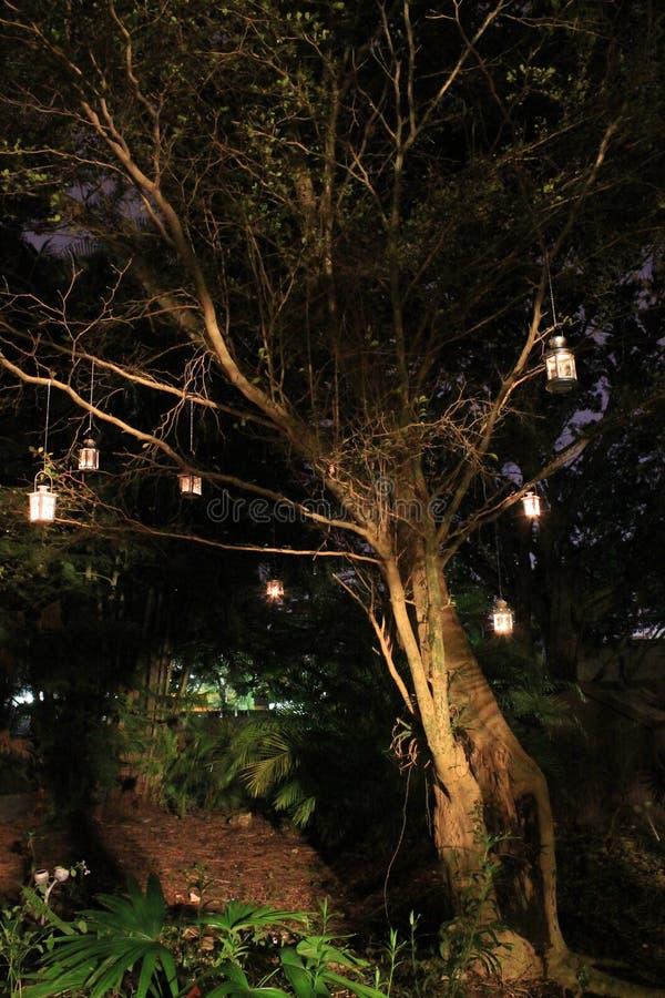 Lanternas que penduram da árvore na noite foto de stock royalty free