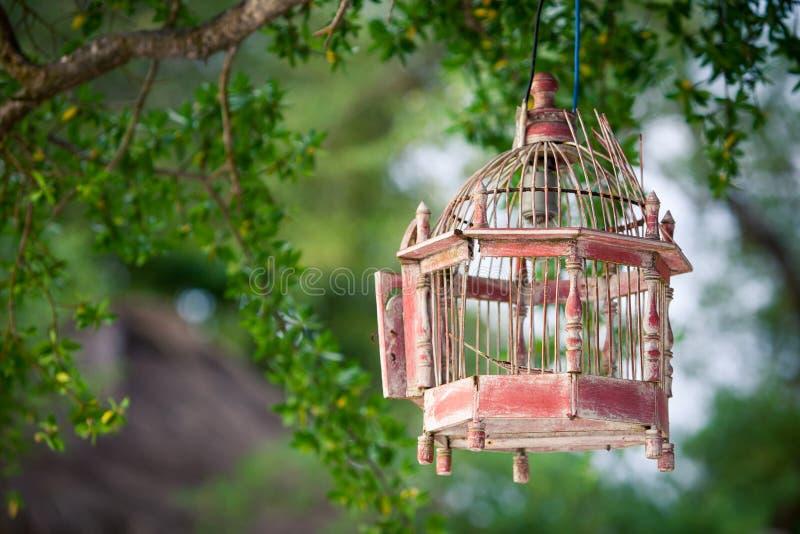 Lanternas que penduram das árvores para decorar na gaiola de pássaro do por do sol imagem de stock