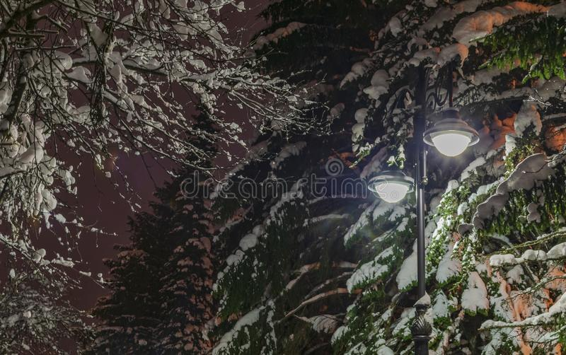 Lanterne dans les couronnes des arbres d'hiver images libres de droits