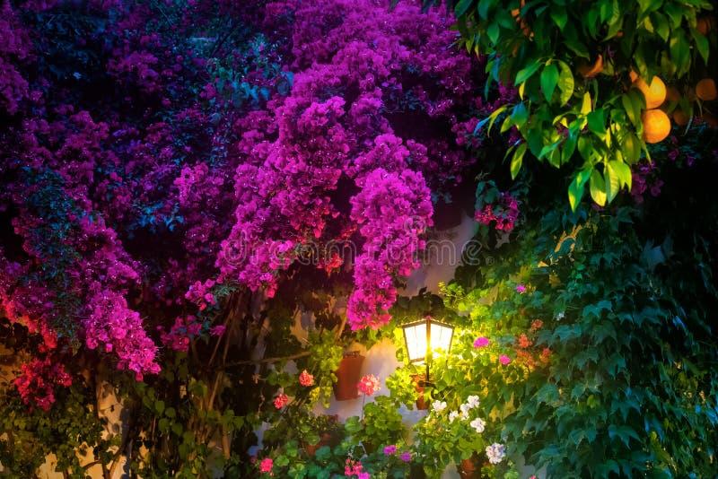 Lanterne de mur entourée par les fleurs colorées photographie stock libre de droits