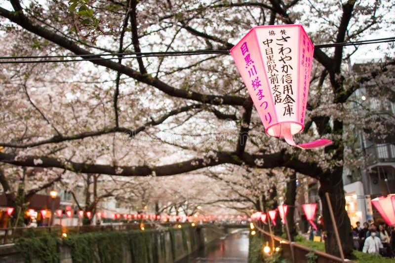 Lanterne en Sakura Festival au Japon La lanterne indique la lumière de Dieu image libre de droits