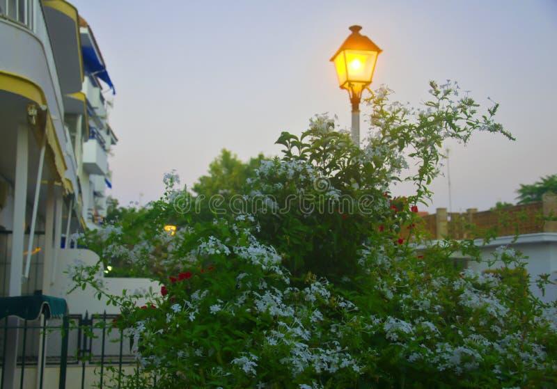 Lanterne jaune derrière le buisson des fleurs, égalisant le temps photos stock