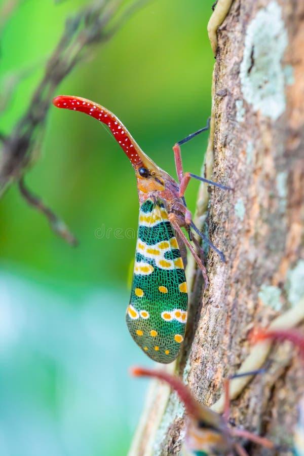 Lanternfly auf dem Baumstamm lizenzfreies stockbild