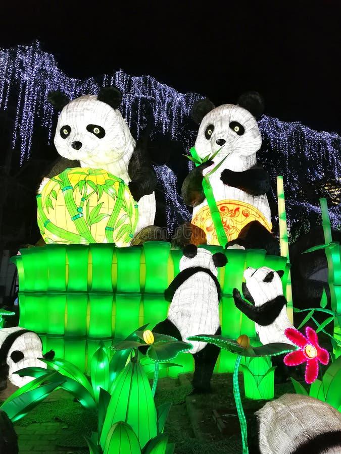 Panda Lantern in Zigong stock photo