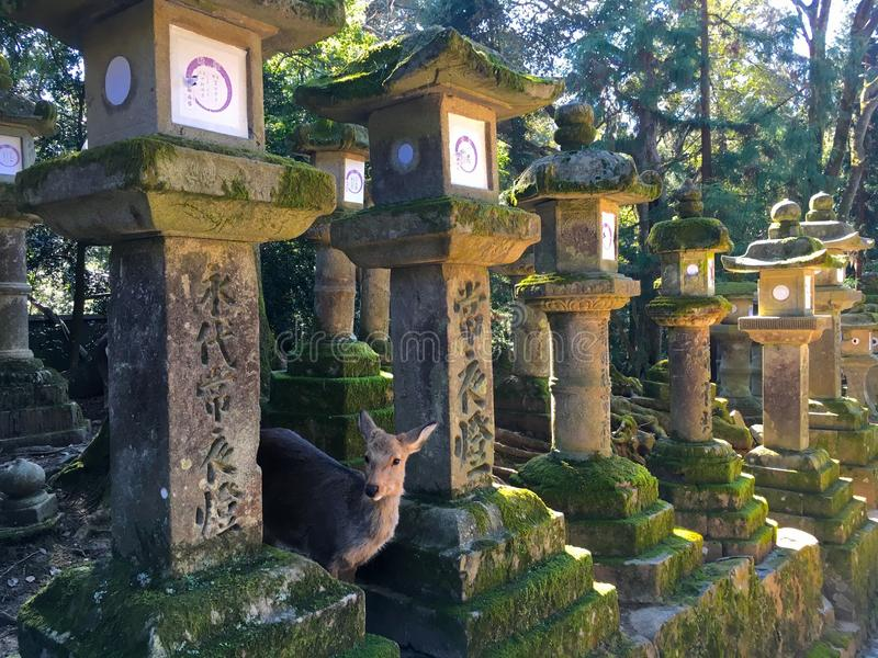 Lanterns in Kasuga Taisha shinto shrine in Nara Japan stock photos
