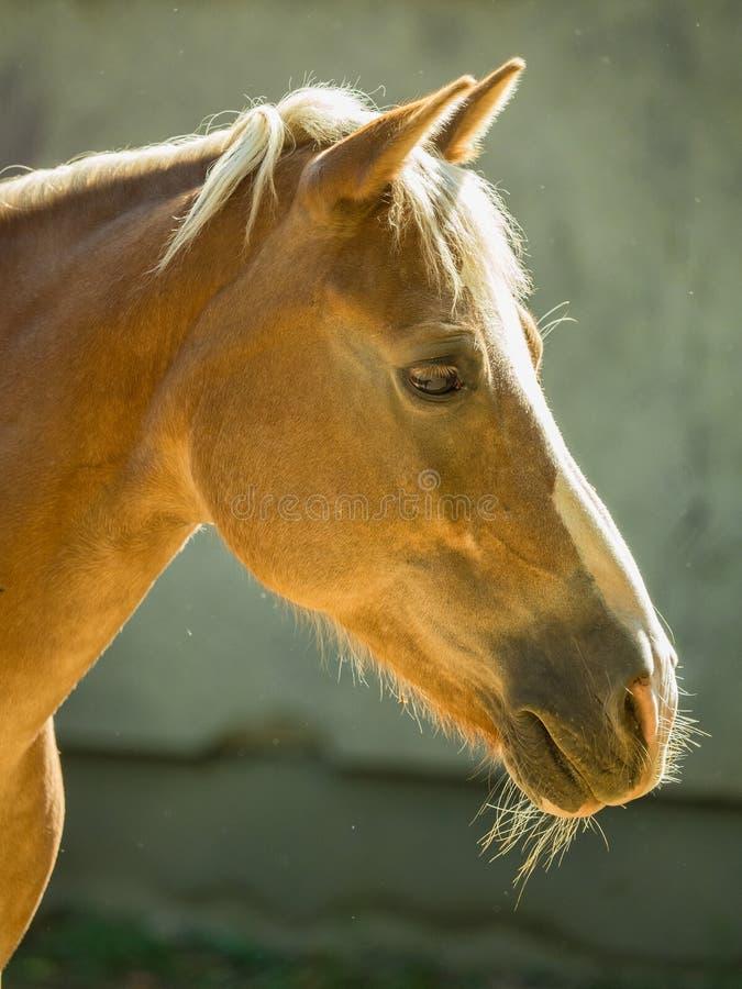 Lantgård för häst Head royaltyfria foton