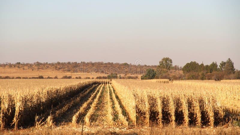 Lantgård i Potchefstroom, Sydafrika royaltyfri foto