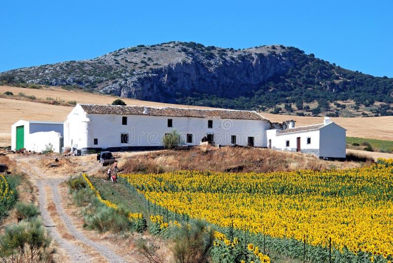 Lantgård- och solrosfält, Andalusia, Spanien. royaltyfria bilder