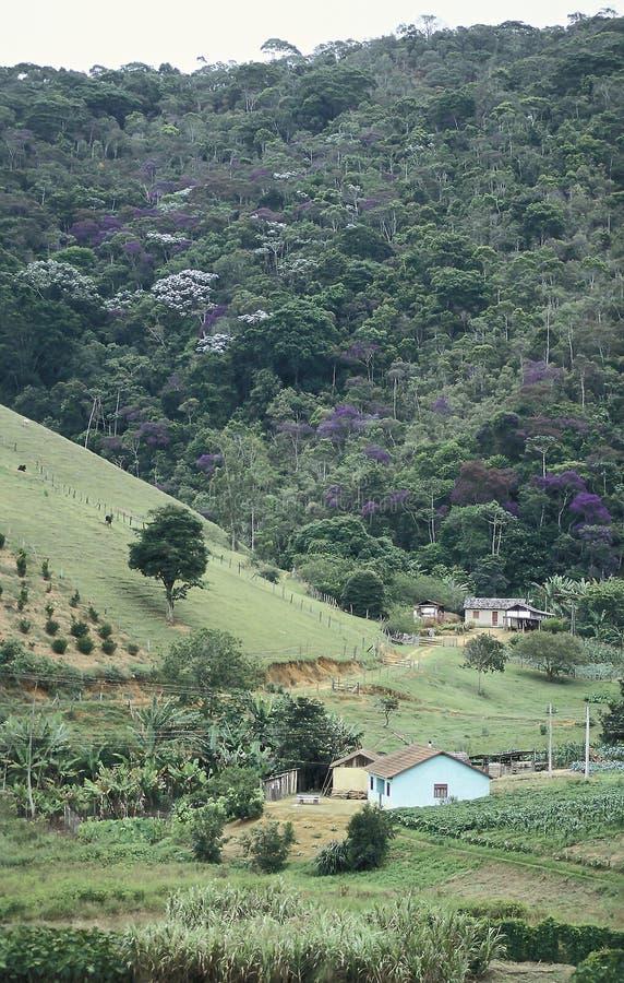 Lantgårdar och skogsavverkning i sydliga Brasilien royaltyfria foton