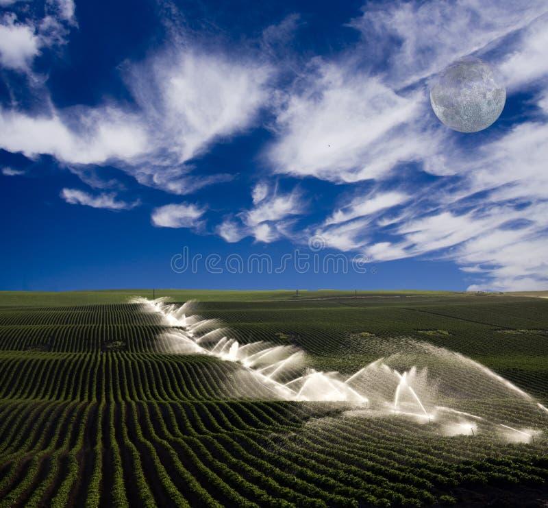lantgårdbevattning royaltyfri fotografi