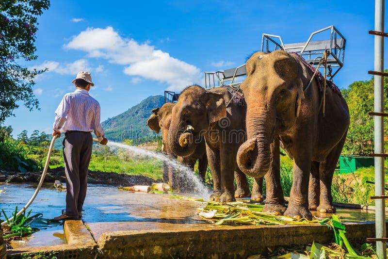 Lantgården av elefanter inte långt från Dalat arkivbild
