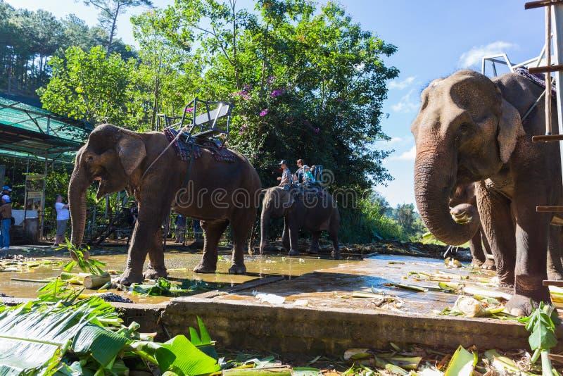 Lantgården av elefanter inte långt från Dalat royaltyfri fotografi