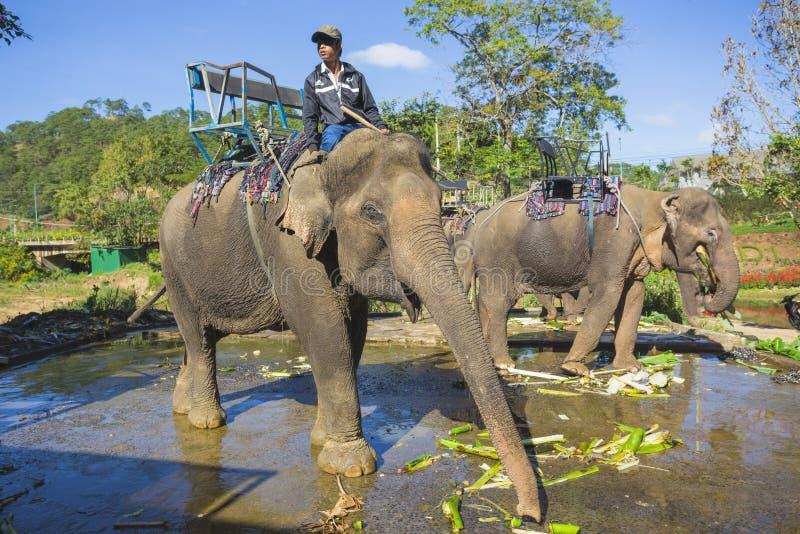 Lantgården av elefanter inte långt från Dalat royaltyfria foton