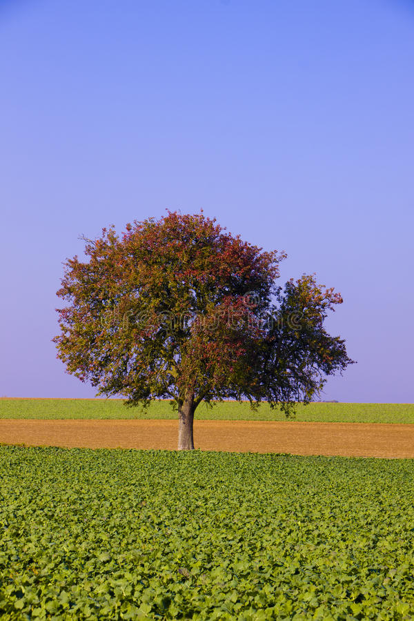lantgården fields den lone treen fotografering för bildbyråer