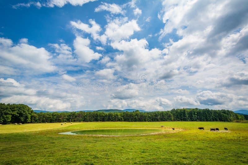 Lantgårdfält och litet damm i det lantliga Shenandoahet Valley av Virg royaltyfri bild
