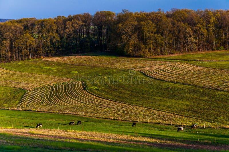 Lantgårdfält och Rolling Hills av sydliga York County, Pennsylva royaltyfri foto