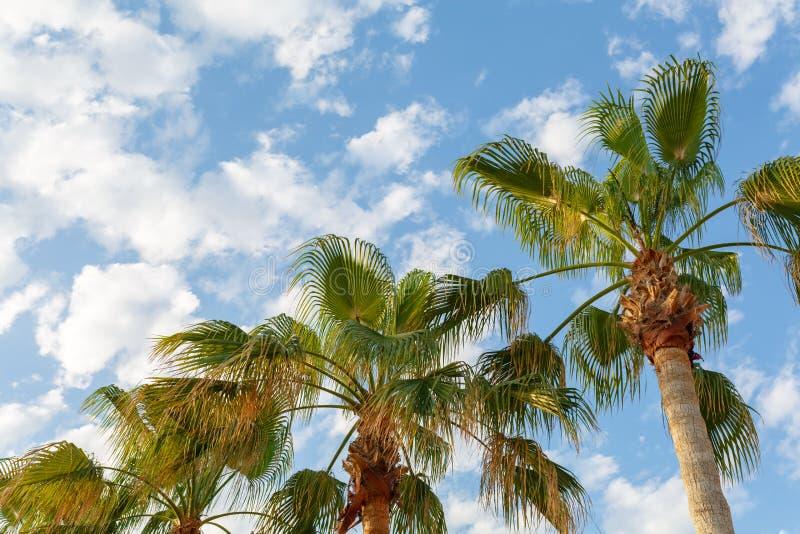 lantgårdfrukter green full den saftiga fröskidan för makroärtafotoet ripen sommarswinggrönsaker Gröna palmträd mot den blåa himle royaltyfri fotografi
