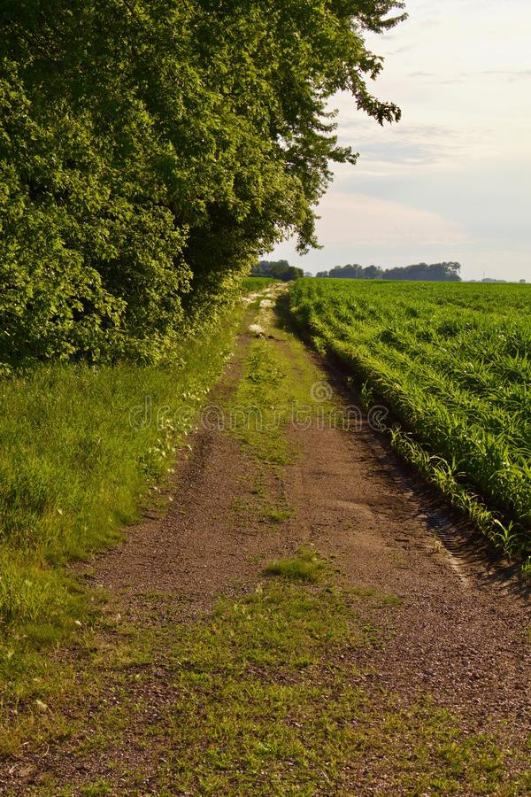 Lantgårdgränd baktill av fältet fotografering för bildbyråer