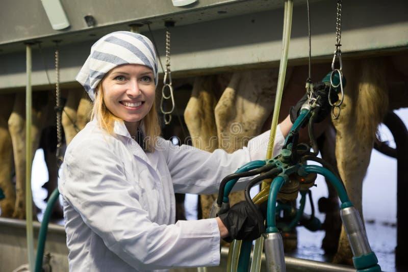 Lantgårdmjölkerska i koladugård med den automatiska kon som mjölkar maskiner royaltyfria bilder