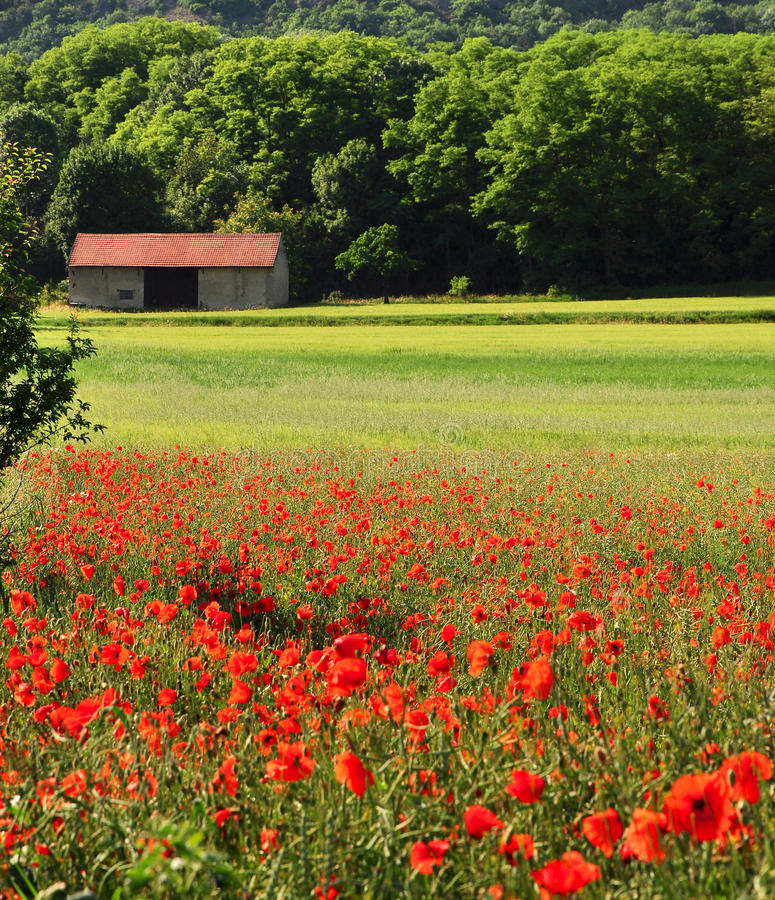 lantgårdsäsongsommar royaltyfria bilder