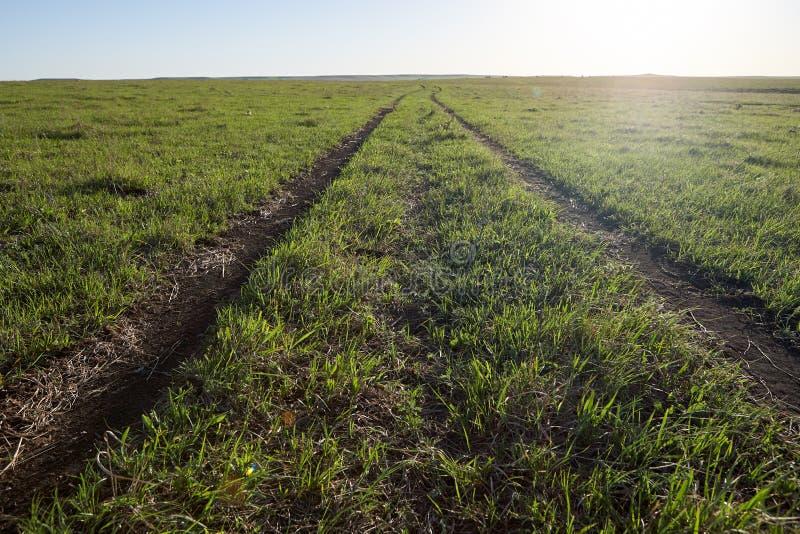 Lantgårdspår till och med grönt gräs- beta arkivfoton