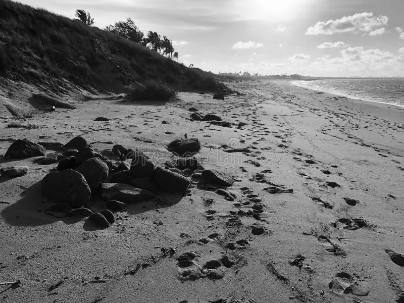 Lantlig beachscape fotografering för bildbyråer